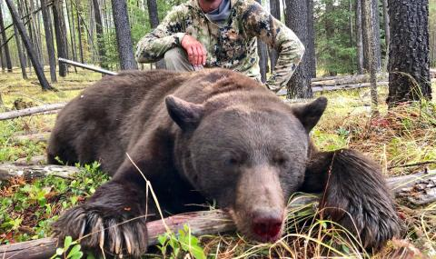 montana black bear hunt